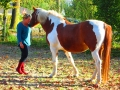 Dymphy-Co-Paardencoaching